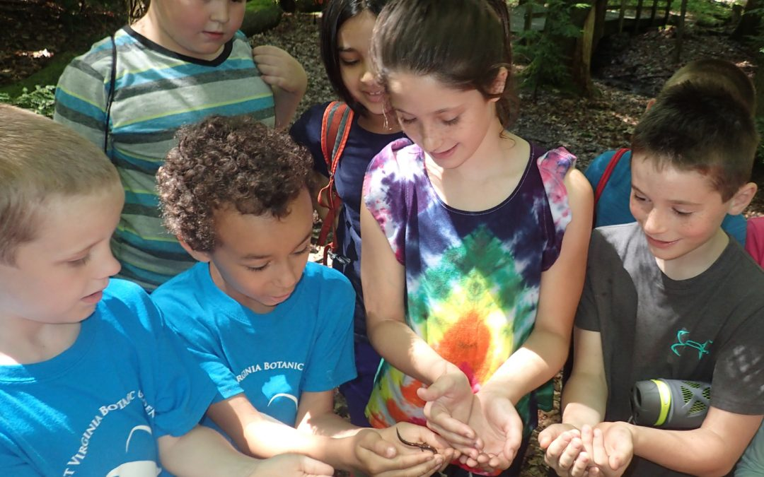 Expanding the Reach of Summer Nature Camp
