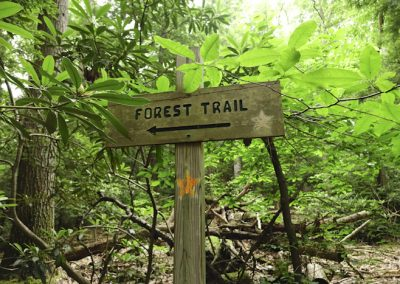 Follow the Orange Star Blaze to Stay on the Forest Trail