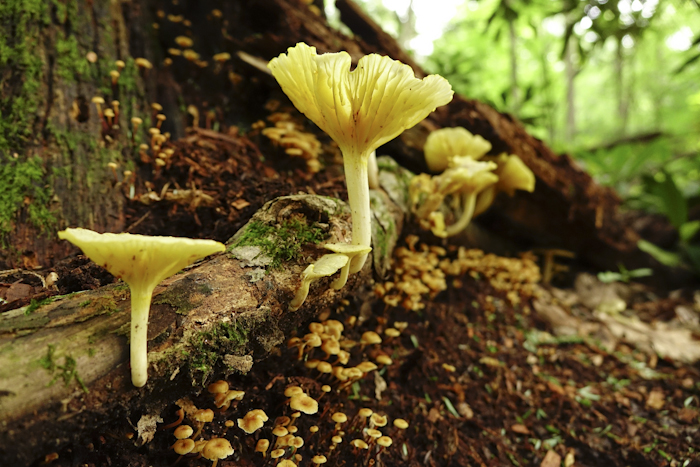 Summer mushrooms on the Forest Trail