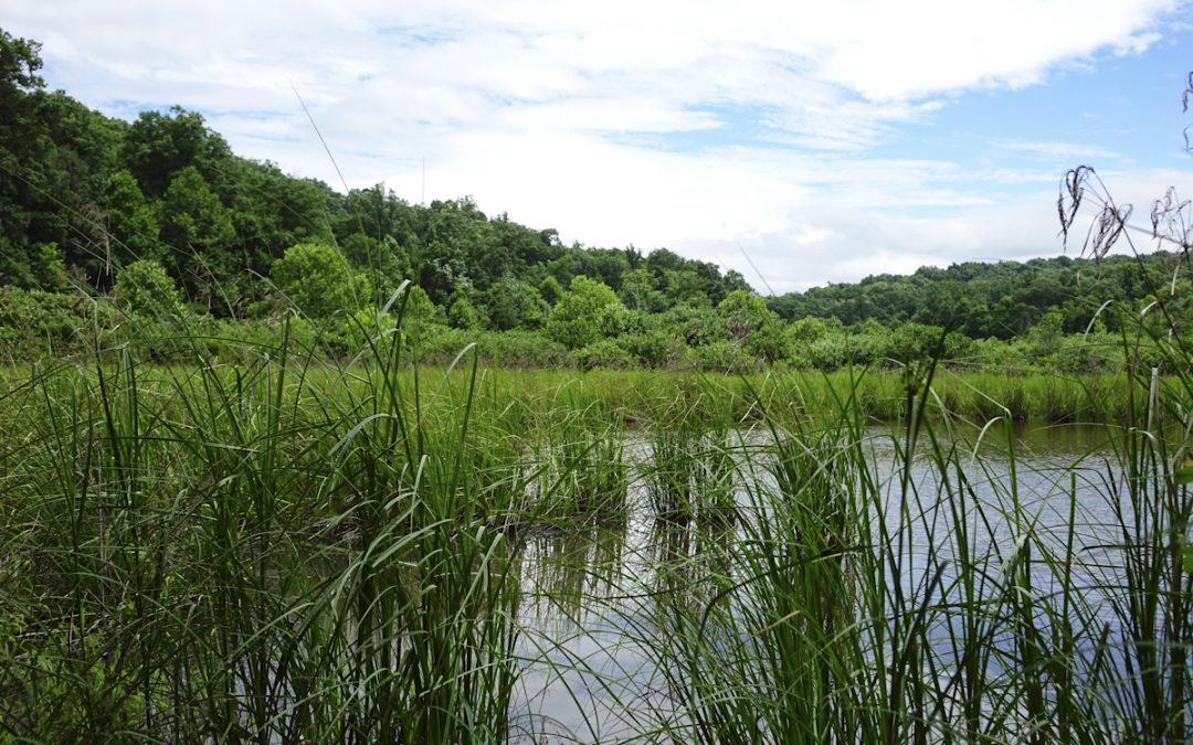 Pond View Trail