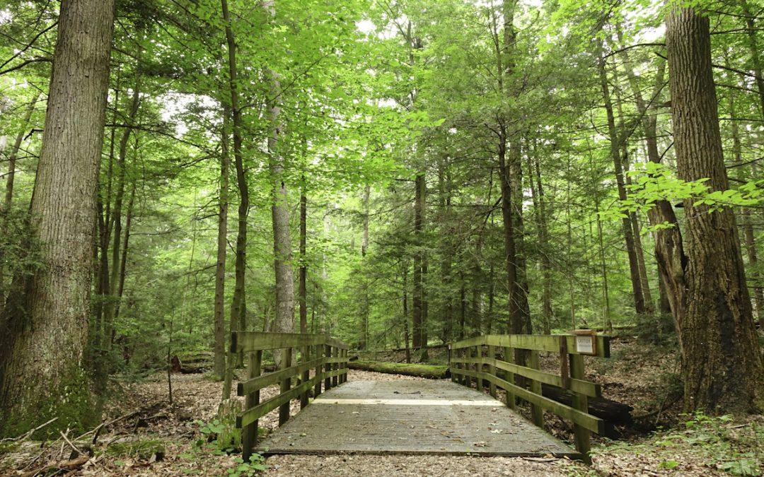 Wetland Loop Trail