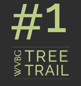 WVBG Tree Trail Red Oak